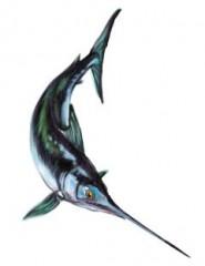 u pisci spada a ghiotta,pesce spada a ghiotta,le ricette in dialetto,cucina